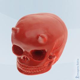 Imagem de Cranio Diabo (Osso)