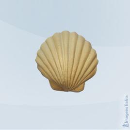 Imagem de Concha Com 6peças em resina