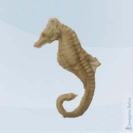 Imagem de Cavalo marinho em