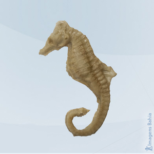 Cavalo marinho em , 6,5cm