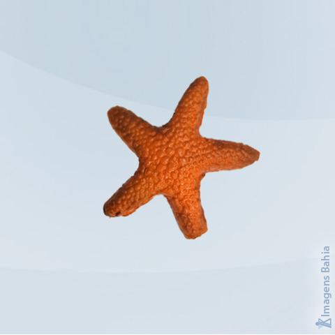 Imagem de Estrela do Mar pacote com 6 un.